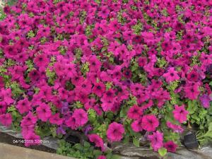 Ghivece pt rasaduri de flori