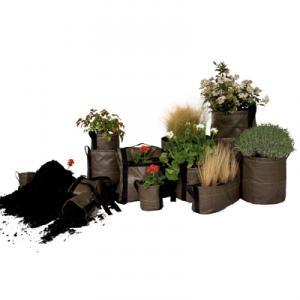 Intretinere plante de interior