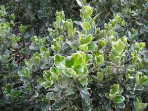 Intretinere plante gradini