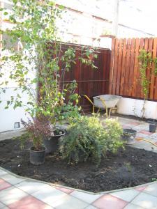 Arbusti si plante ornamentale