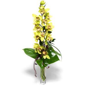 Orhidee imperiala