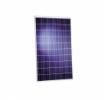 Promotie: Panou fotovoltaic poly 50Wp